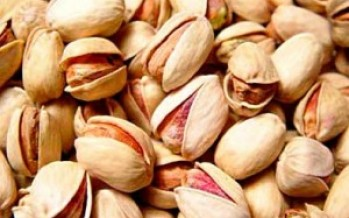 26% Hike in Pistachio Yield in Samangan