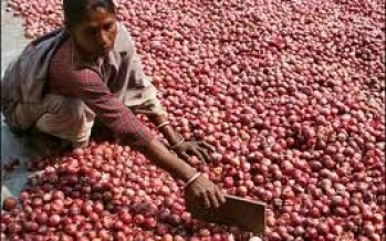 Afghan onions fail to rein in price of onion in India