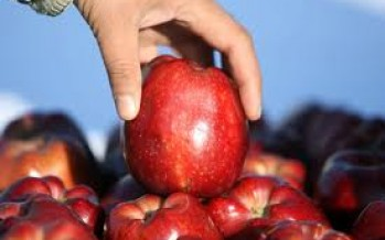 Paktia in need of market for their apples