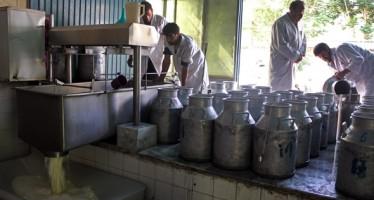 MIGA to fund Kabul Dairy Processing Plant