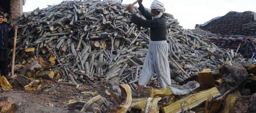 Prices of gas and firewood plunge in Kabul market