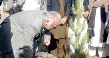 Spring tree-plantation drive begins in Helmand