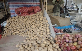 Unprecedented Yield in Badakhshan