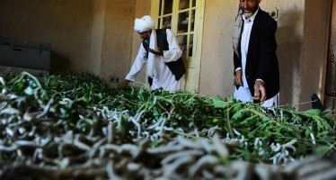 Sericulture reviving in Western Afghanistan