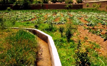 Efforts underway to standardize Afghanistan's fruits production