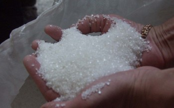New Baghlan Sugar Company produces 570 tons of sugar