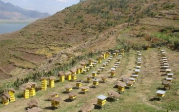 Unprecedented rise in honey production in Afghanistan