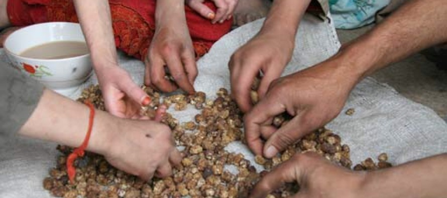 """Severe food insecurity on the rise in Afghanistan – """"extremely alarming trend"""""""