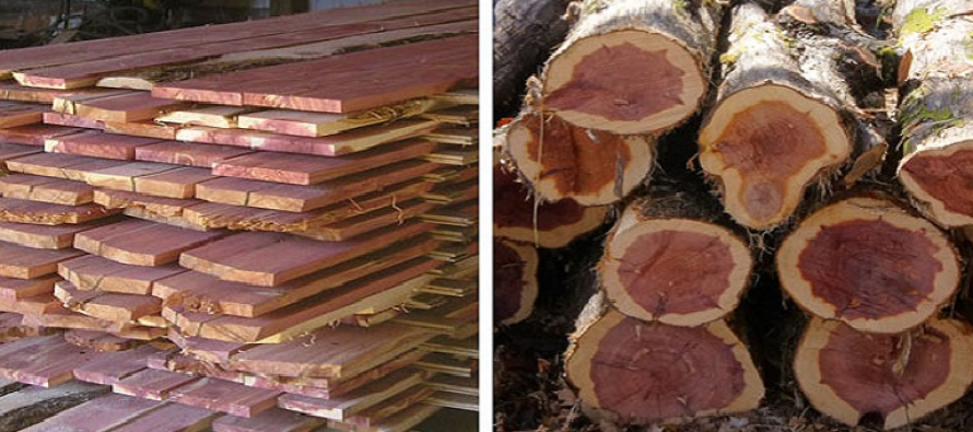 IS smuggling timber in eastern Afghanistan