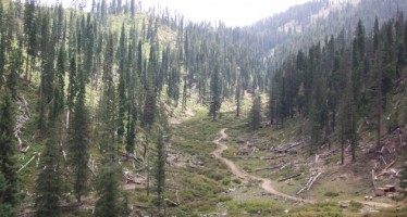 100-hectare pistachio forests being revived in Badakhshan