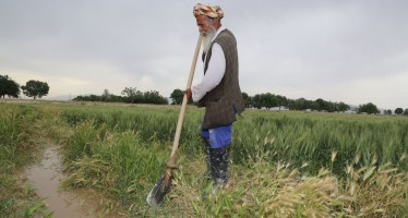 "USAID supports Afghanistan's ""farmer-focused"" approach to develop agriculture"