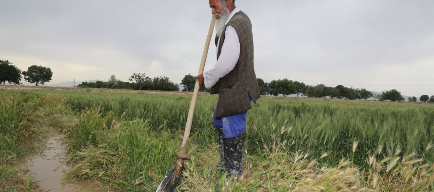 """USAID supports Afghanistan's """"farmer-focused"""" approach to develop agriculture"""