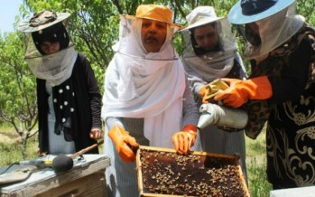 Afghanistan becoming self-reliant in honey production