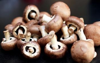 Women in Jawzjan start growing mushrooms for a living