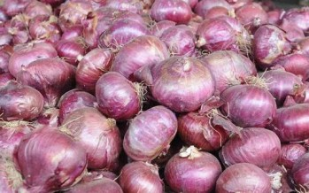 121 cold storages for onions established across Kabul