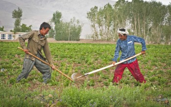EU to provide $2.5mn to promote agricultural technology in Afghanistan