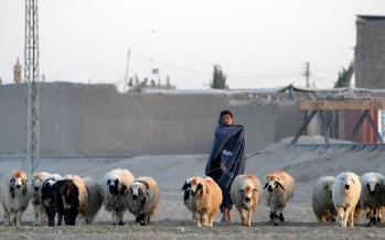 Prices of animals soar ahead of Eid-ul-Adha