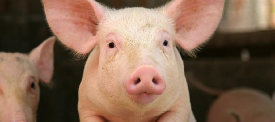 Afghanistan one of the largest markets for Pakistan's pork exporters