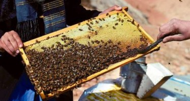 Afghan widow beekeeper refuses to beg and starts her own business