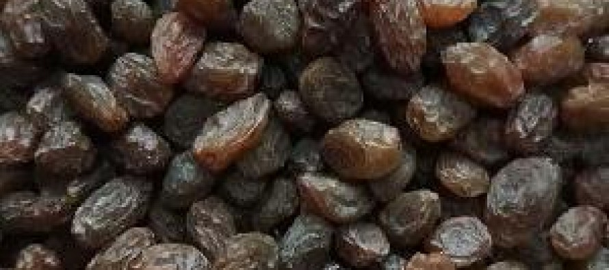 World Bank Supports Raisin Production in Afghanistan