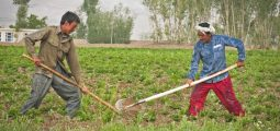 Japan Willing to Assist in Modernizing Afghanistan's Agriculture