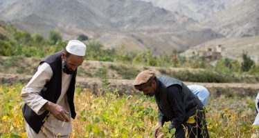 Republic of Korea Contributes $1mn To Improve Food Security Through Soy Production in Afghanistan