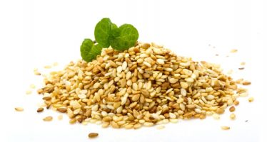 Balkh Sees Significant Hike In Sesame & Linseed Production