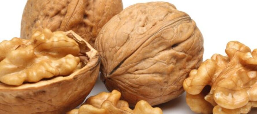 Badakhshan's Walnut Production Down 50% Due to Climate Change