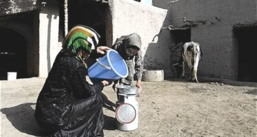 42% of Afghan Population is in Emergency Levels of Food Insecurity
