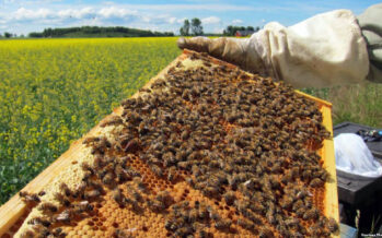Farah Province Produces Over 10 Tons of Honey in the Past Year